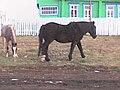 Berezovyy Solonets, Samarskaya oblast', Russia, 445164 - panoramio (2).jpg