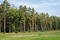 Bergen-Belsen concentration camp memorial - the former camp's main street - 03.jpg