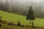 Bergtocht van Tschiertschen (1350 meter) via Ruchtobel naar Löser (1680 meter) 014.jpg