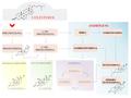 Biosíntesi dels andrògens2.png