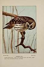 Bird-life; a guide to the study of our common birds (1898) (14563078800).jpg