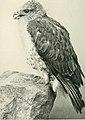 Bird-lore (1899) (14755288792).jpg