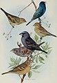 Bird-lore (1911) (14752176441).jpg