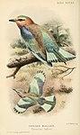 Bird notes (1902) (14750894785).jpg