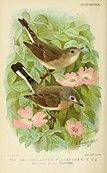 Bird notes (1913) (14563437438).jpg