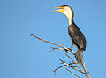 Bird on branch Gambia.jpg