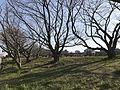 Biwabashi Park 20170306-5.jpg