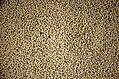 Black gram dal Phaseolus mungo JEG3361.jpg
