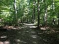 Blendon Woods Metro Park October 2018 14.jpg