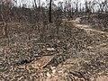 Blue Mountains Bushfire Damage JAN2020.jpg