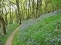 Bluebell woods on Helmeth Hill - geograph.org.uk - 1866067.jpg