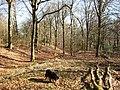 Boddington Banks looking East - geograph.org.uk - 1185756.jpg