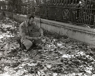 Japanese invasion money - Street littered with invasion money, Rangoon, 1945.