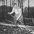 Bosbewerking, arbeiders, boomstammen, gereedschappen, Bestanddeelnr 251-9134.jpg