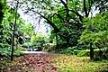 Botanic garden limbe107.jpg