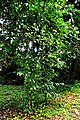 Botanic garden limbe2.jpg