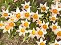 Botanischer Garten - Fruehlingsblumen (Spring Flowers) - geo.hlipp.de - 35122.jpg