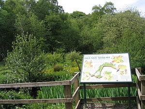 Breary Marsh - Breary Marsh