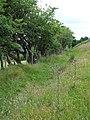 Bridleway or road^ Nantcwnlle, Ceredigion - geograph.org.uk - 914882.jpg