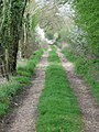 Bridleway to A31 - geograph.org.uk - 1251837.jpg