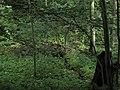 Bubovice-Srbsko - panoramio (42).jpg