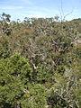 Budj Bim ‐ Mt Eccles National Park, Victoria, Australia 42.jpg