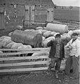 Bundesarchiv Bild 183-73168-0002, Groß-Gastrose, Bauern vor Außengehege mit Schweinen.jpg