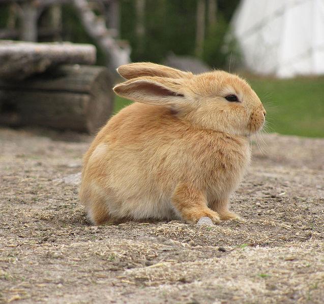 File:Bunny in zoo.jpg