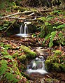 Burns Run Wild Area (15) (15752726675).jpg