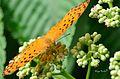 Bussy Butterfly.jpg