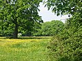 Buttercup meadow adjacent to Westwood, Netley Abbey - geograph.org.uk - 93586.jpg