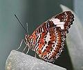 Butterfly 12 (30876801245).jpg