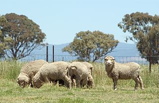 Animal welfare and rights in Australia Treatment of and laws concerning non-human animals in Australia