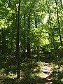 California Woods (Cincinnati, Ohio).jpg