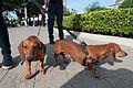 Caminata por los perros y animales Maracaibo 2012 (35).jpg