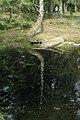 Camp celtique de la Bure - Bassin des Dianes 5.jpg