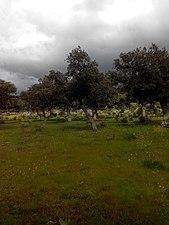 Campos de Campillo de Azaba.jpg