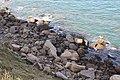 Cap Gris-Nez, the foot of the cliff.JPG