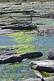 Cape Elizabeth Tidal Pool.JPG