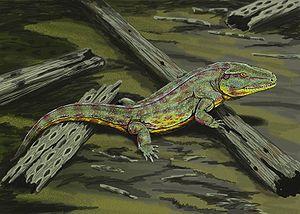 Temnospondyli - Capetus, a basal temnospondyl.