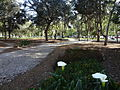 Carolina Park, Quito pic b05.JPG