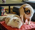 Cat brotherhood.jpg