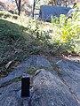Central Park Survey Bolt 2.jpg