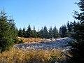 Cestou na Smrk - panoramio (3).jpg