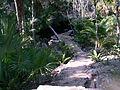 Chac Mool Cenote (4316209019).jpg