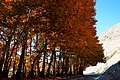 Chalous Road - Asara - Chenarestan - panoramio.jpg