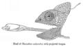 Chameleon gab fbi.png