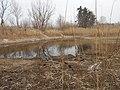 Cherkas'kyi district, Cherkas'ka oblast, Ukraine - panoramio (1019).jpg
