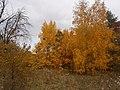 Cherkas'kyi district, Cherkas'ka oblast, Ukraine - panoramio (350).jpg