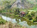 Chiang Rai Province P1110717.JPG